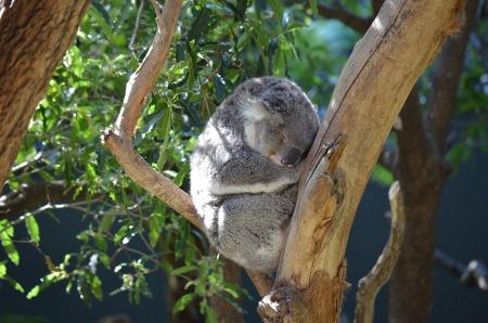 koala-2010177_1280