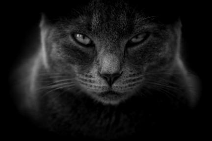 cat-3386220_1280